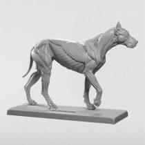 3dtotal Anatomy: Canine figure