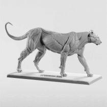 3dtotal Anatomy: Feline figure